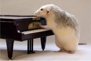 animal,music,animals,art,rats,cute-8a0f2b770c9860b556ad7ce1bf281a66_h