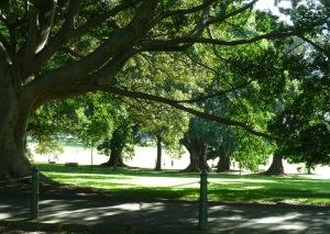 2.Park (1)