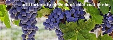 wine-garden copy