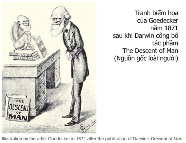 Darwin_The Descent of Man copy