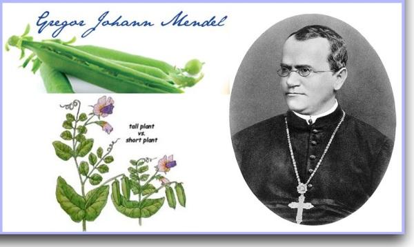 Mendel refuted Darwinism (1)