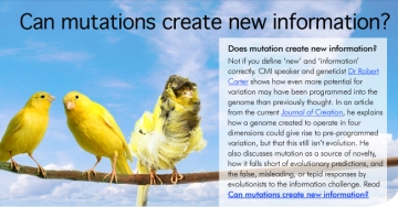 Can mutations create new information