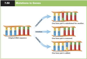 Graphic_Gene_Mutations